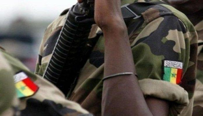 Insolite à Kolda: Un militaire vole un mouton et se fait arrêter