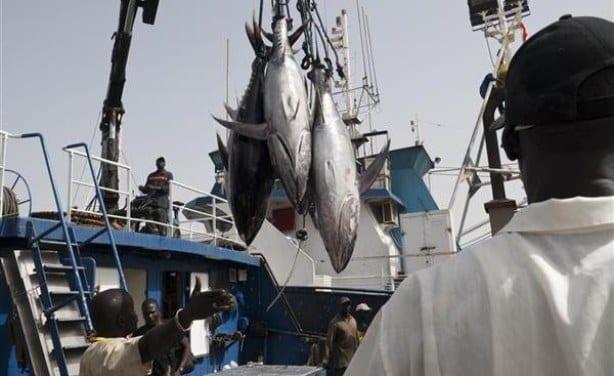 Pillage des ressources halieutiques: Le Sénégal vache laitière de la Chine, Japon...